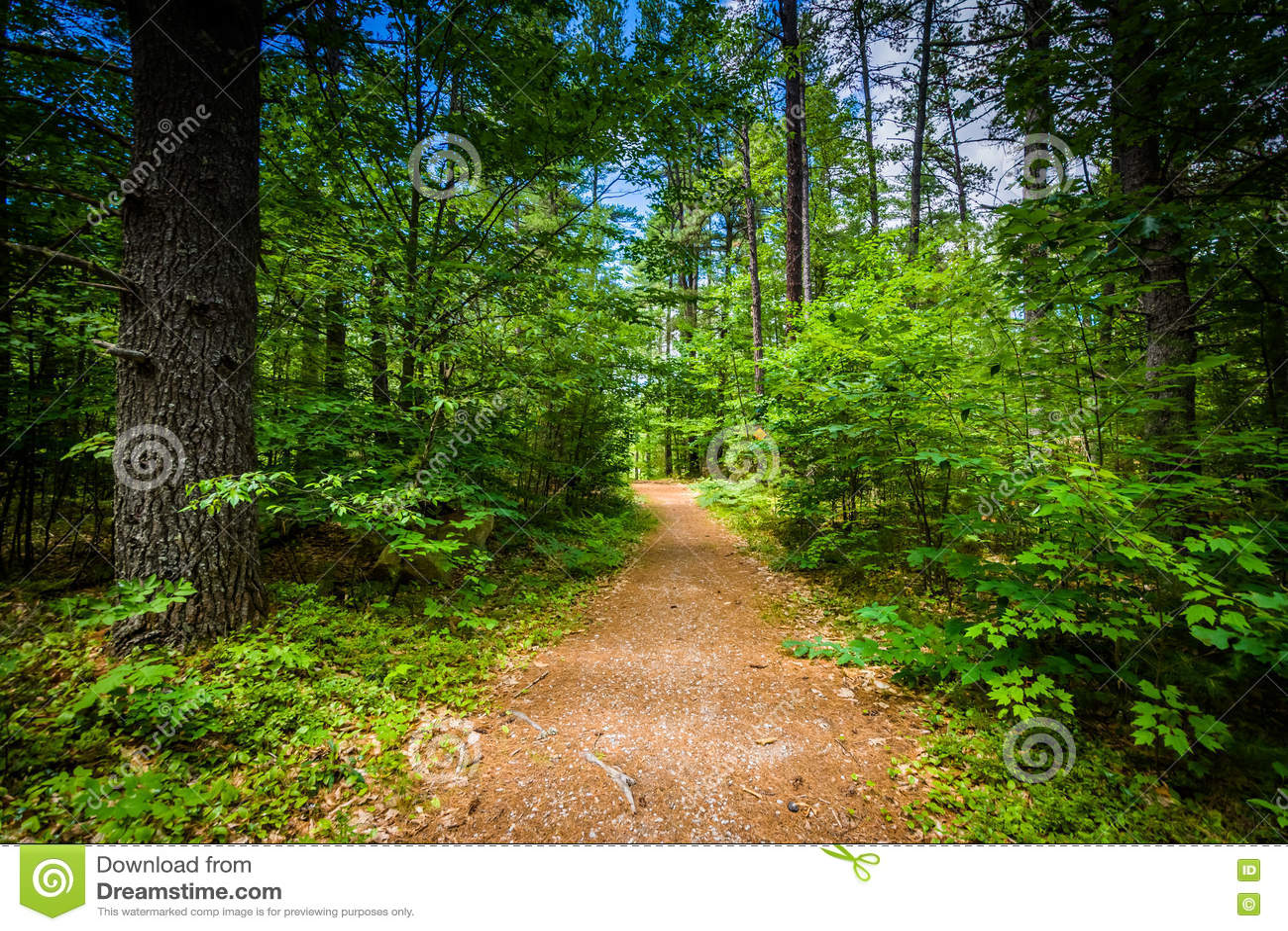 Trascini in una foresta al parco di stato del ruscello dell orso, New Hampshire