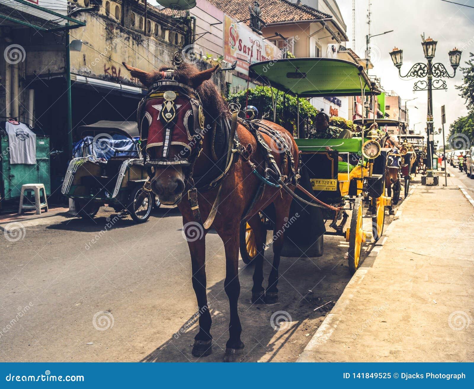 Trasporto tradizionale con i cavalli come la forza motrice
