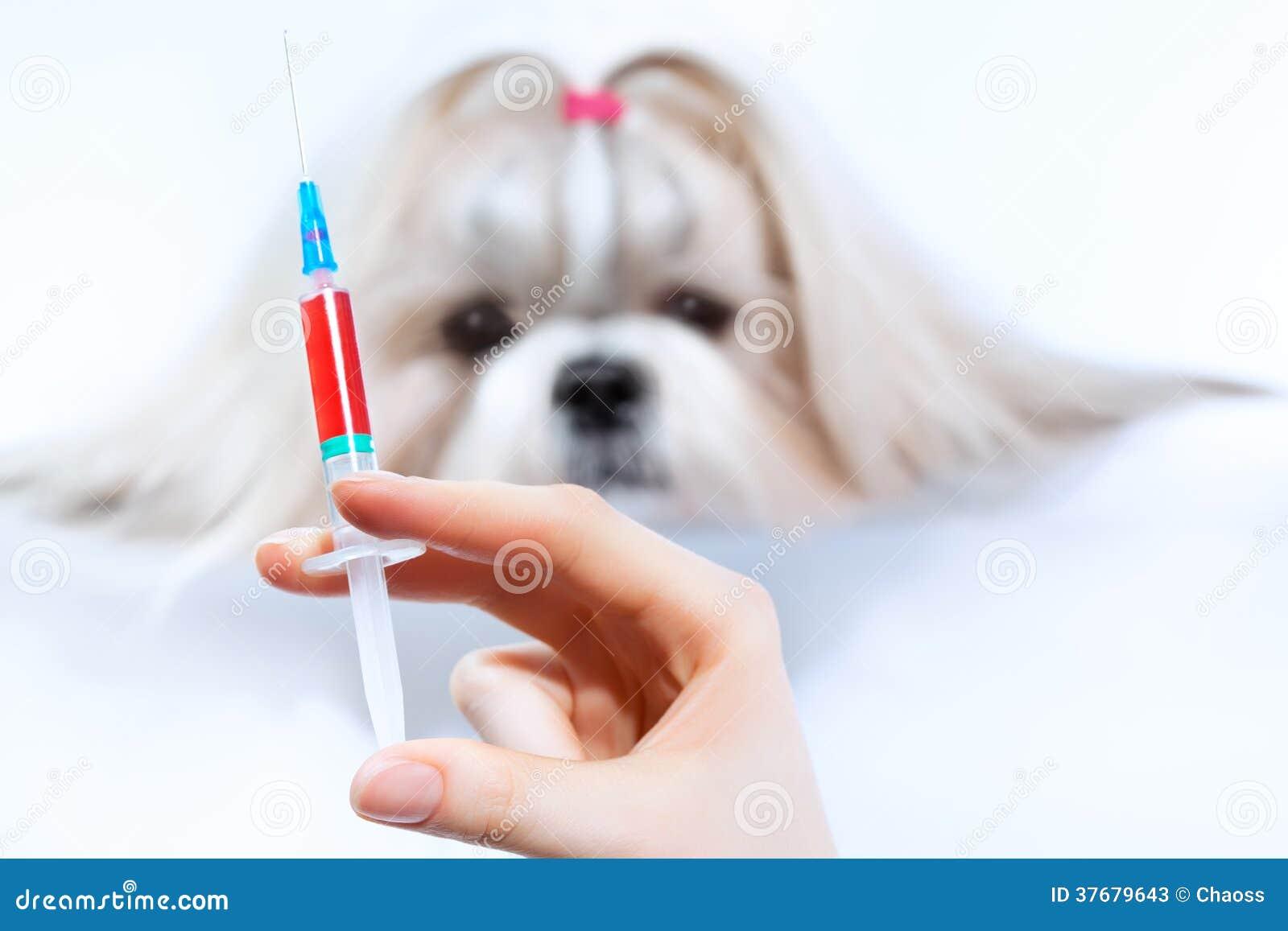 Tratamento do cão do tzu de Shih
