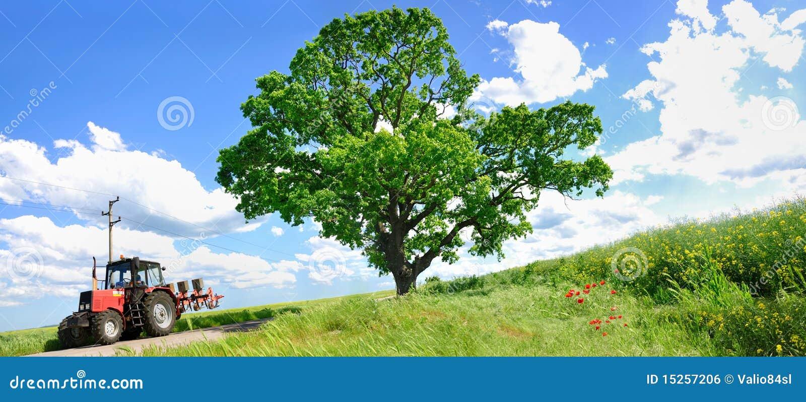 Trator de cultivo e árvore verde grande