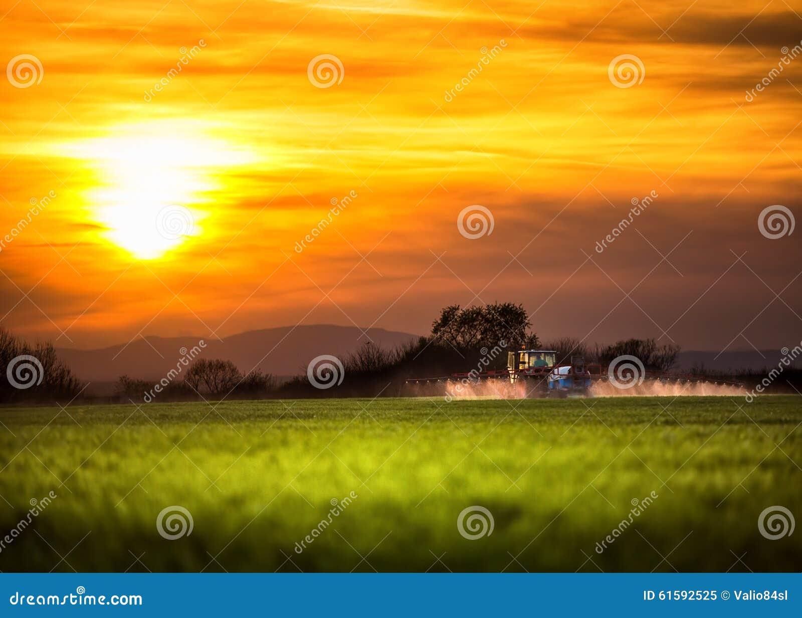 Trator de cultivo que ara e que pulveriza no por do sol
