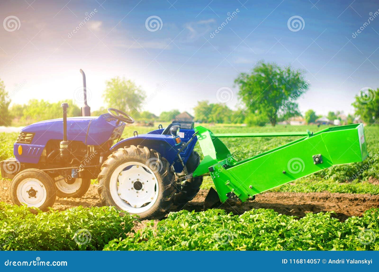 Trattore nel campo con un aratro per le patate di scavatura che raccolgono, lavoro stagionale, ortaggi freschi, agro-cultura, col