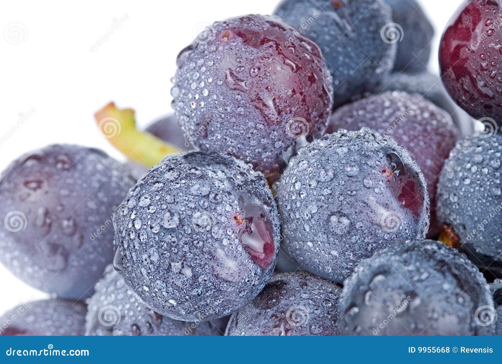 trauben mit tropfen frucht stockfoto bild von frucht betrieb 9955668. Black Bedroom Furniture Sets. Home Design Ideas