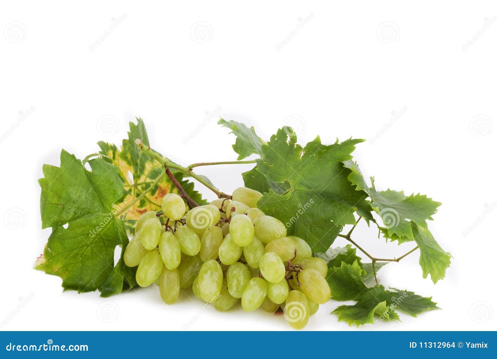 Traubengrün