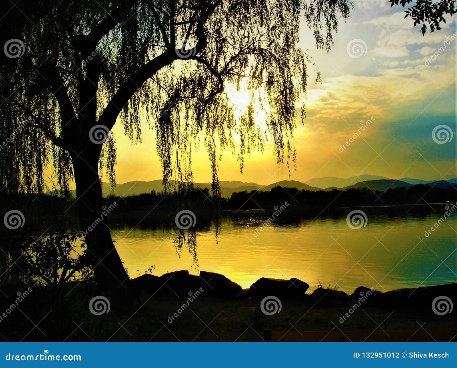 Trauerweide, See, Lumineszenz, Verschwinden und Farben