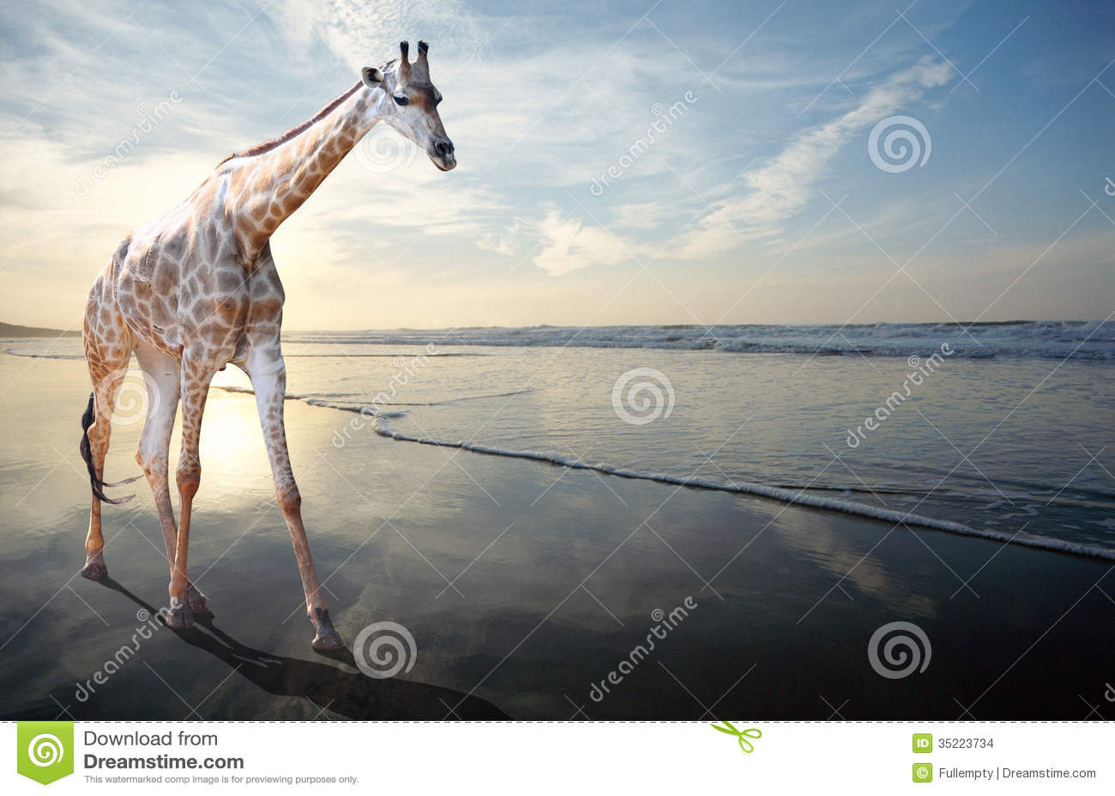 Traum einer Giraffe, die auf sandigen Strand geht