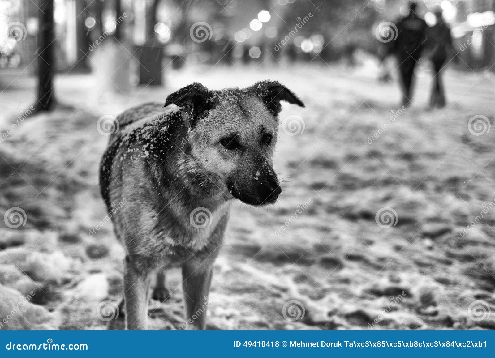 Download Trauriger Hund im Winter stockfoto. Bild von pelz, inländisch - 49410418