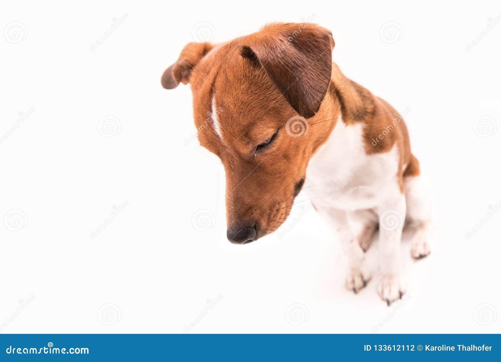 Trauriger Hund lokalisiert