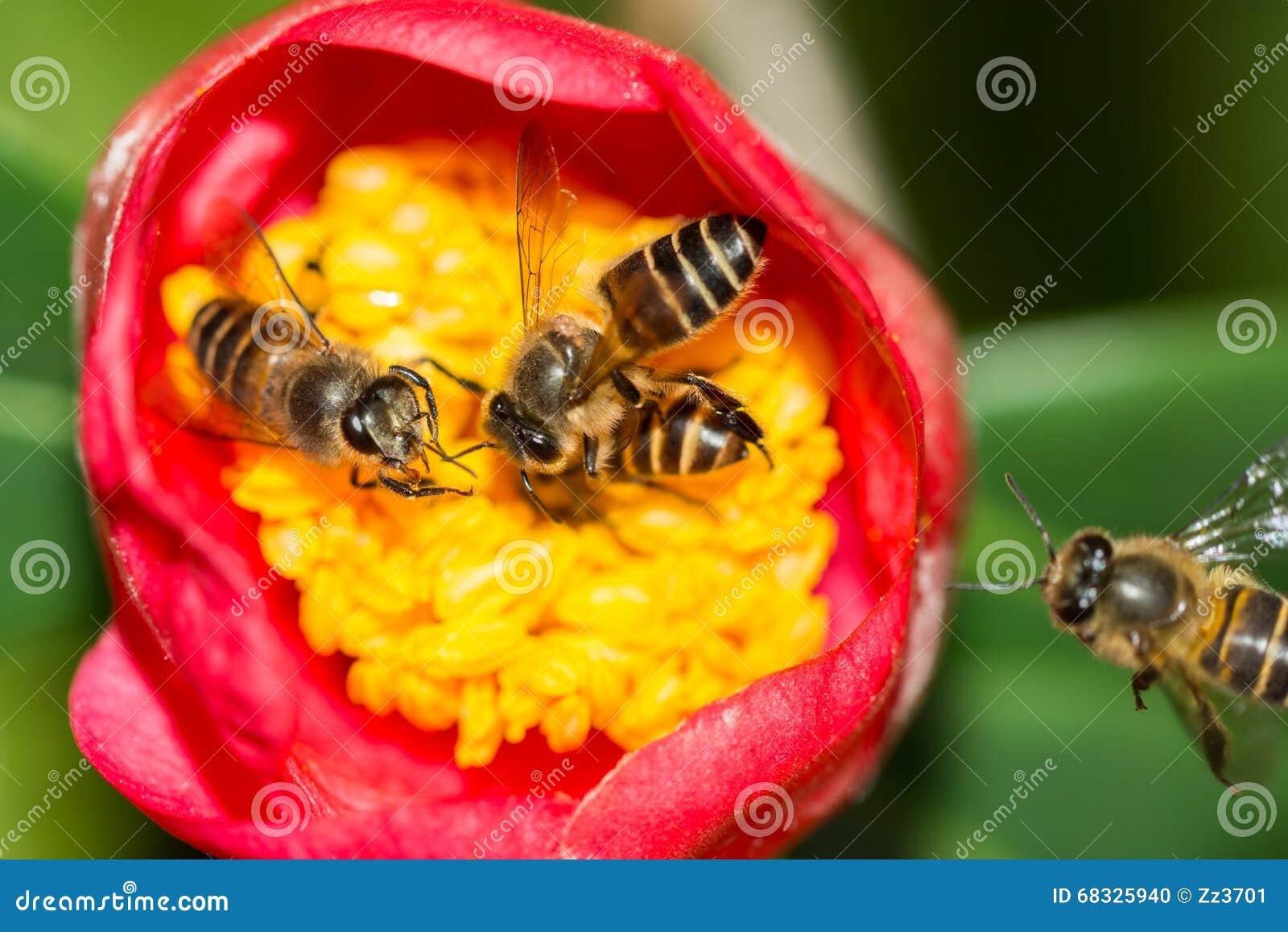Travail d équipe des abeilles