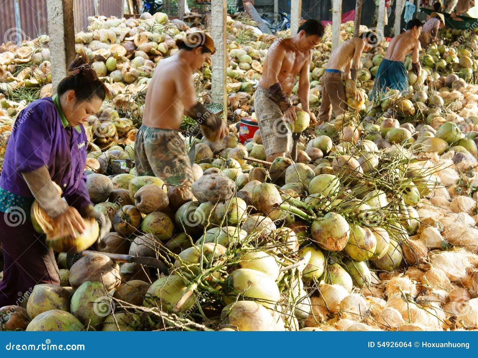Travailleur asiatique, noix de coco, Vietnamien, delta du Mékong