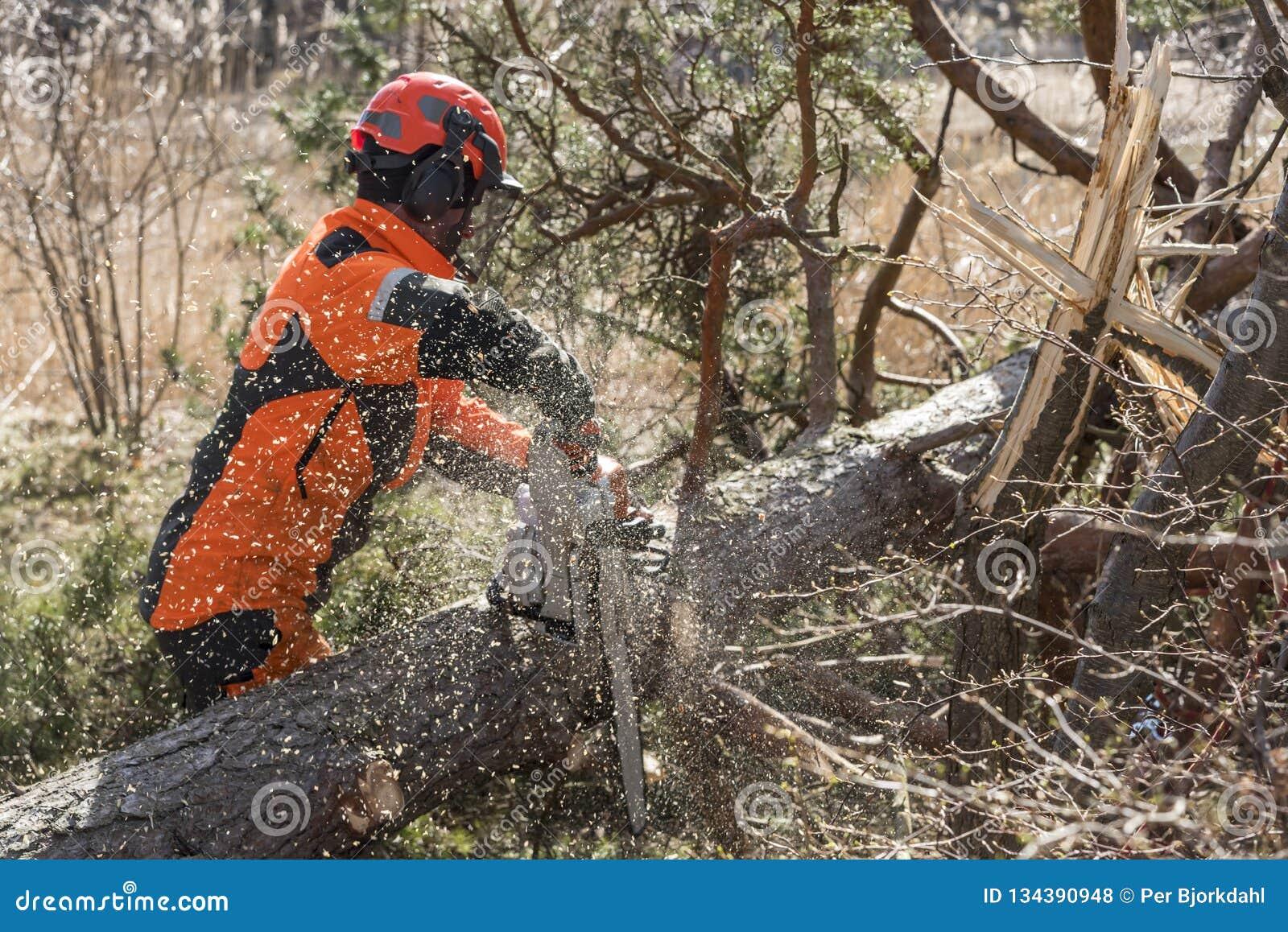 Travailleur de forêt coupant un arbre avec une tronçonneuse