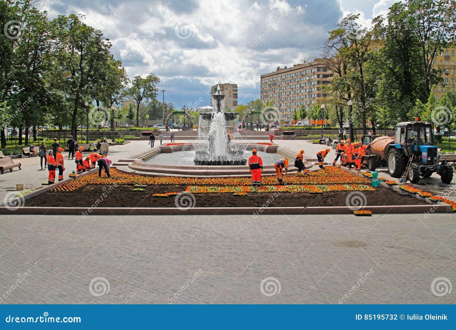 Travailleurs plantant les bégonias rouges dans le lit de fleur sur la place de Pushkin à Moscou