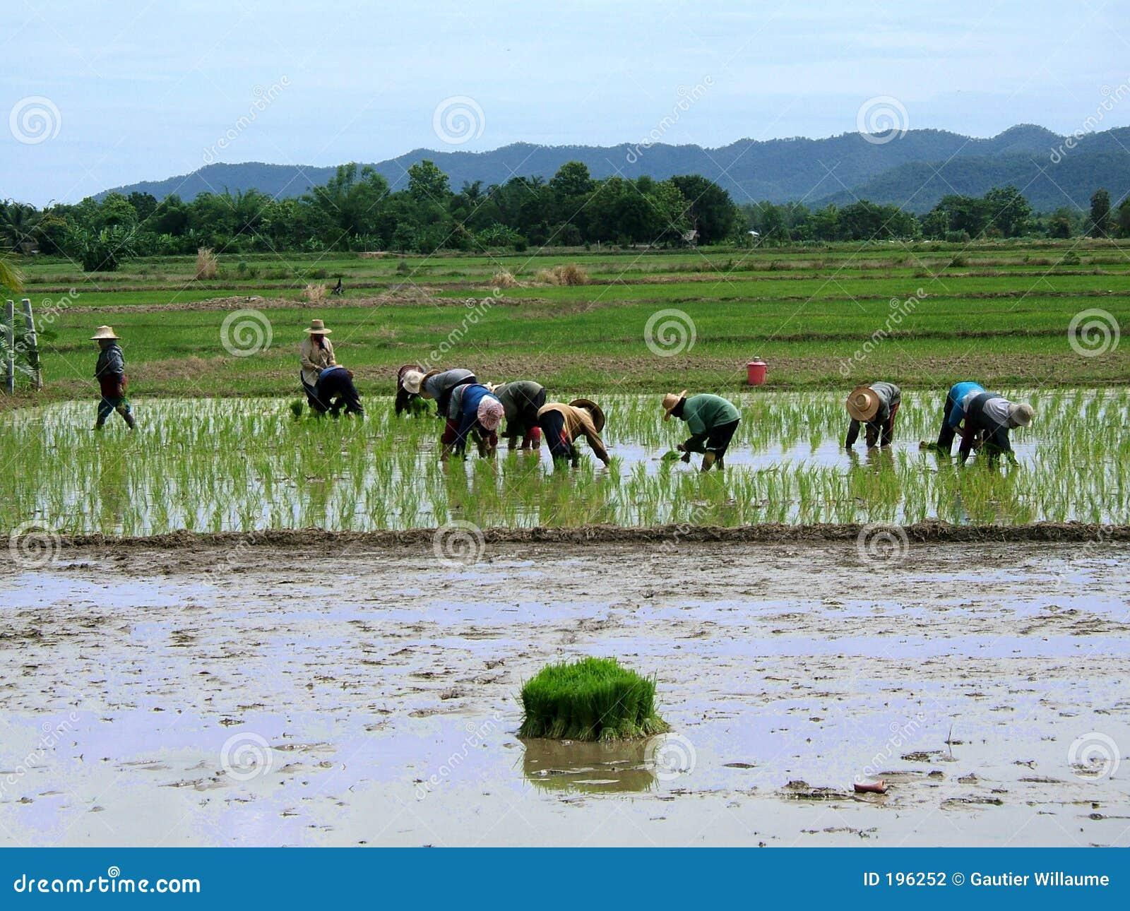 Travailleuses actives en Thaïlande