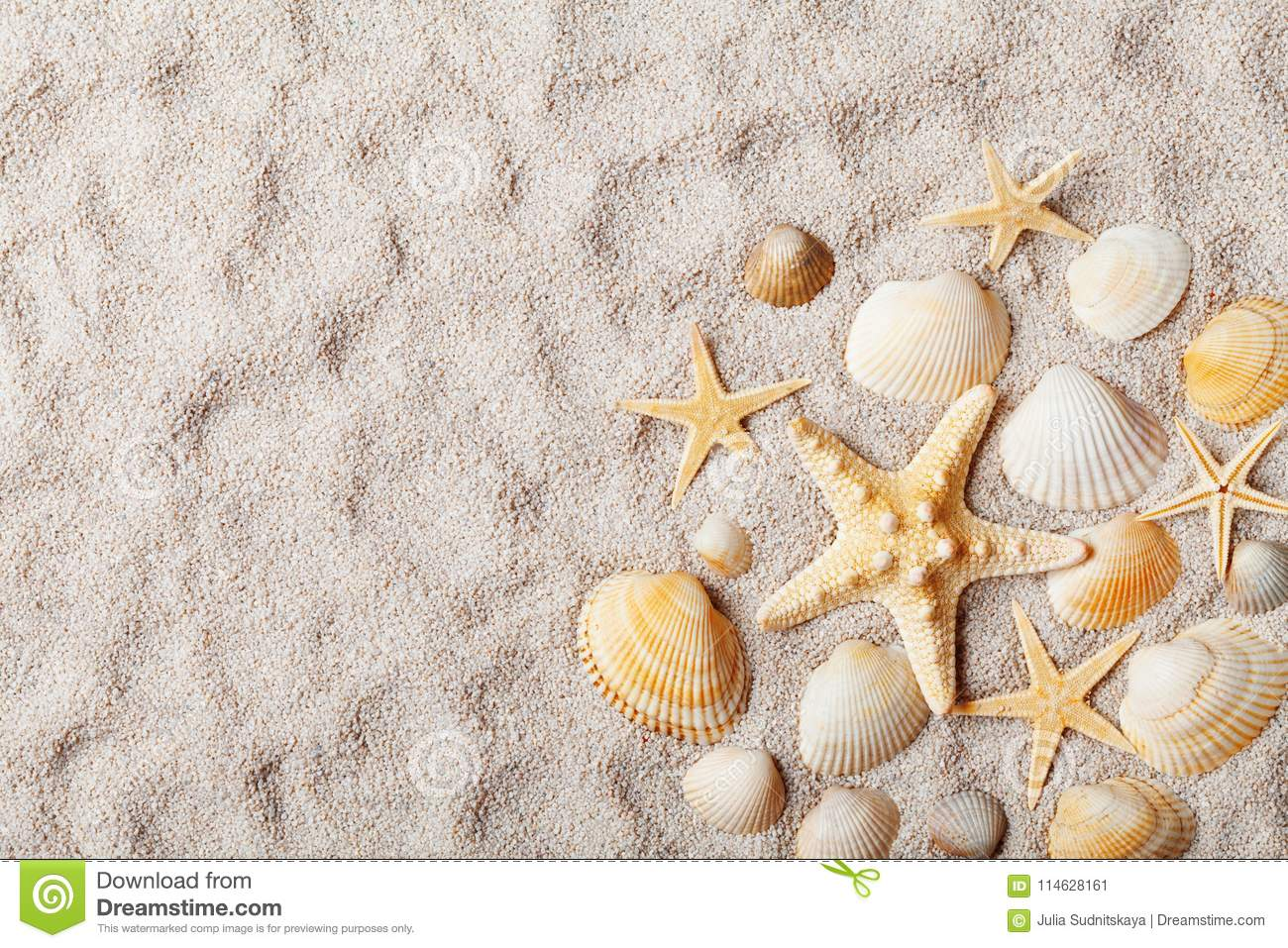 Travel background from sandy beach decorated with starfish and seashell. Top view.