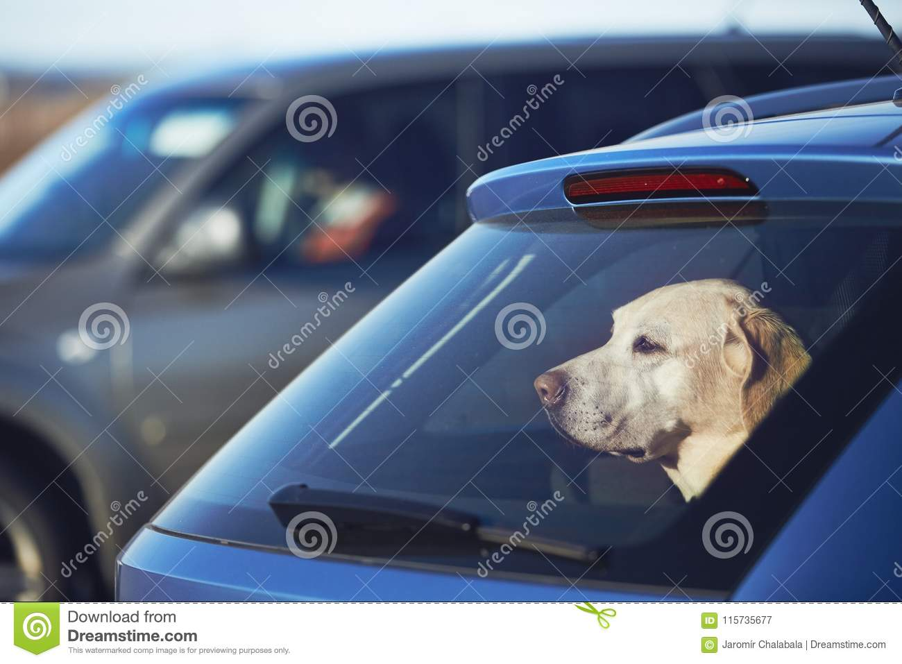 Travel with dog stock image  Image of labrador, nature