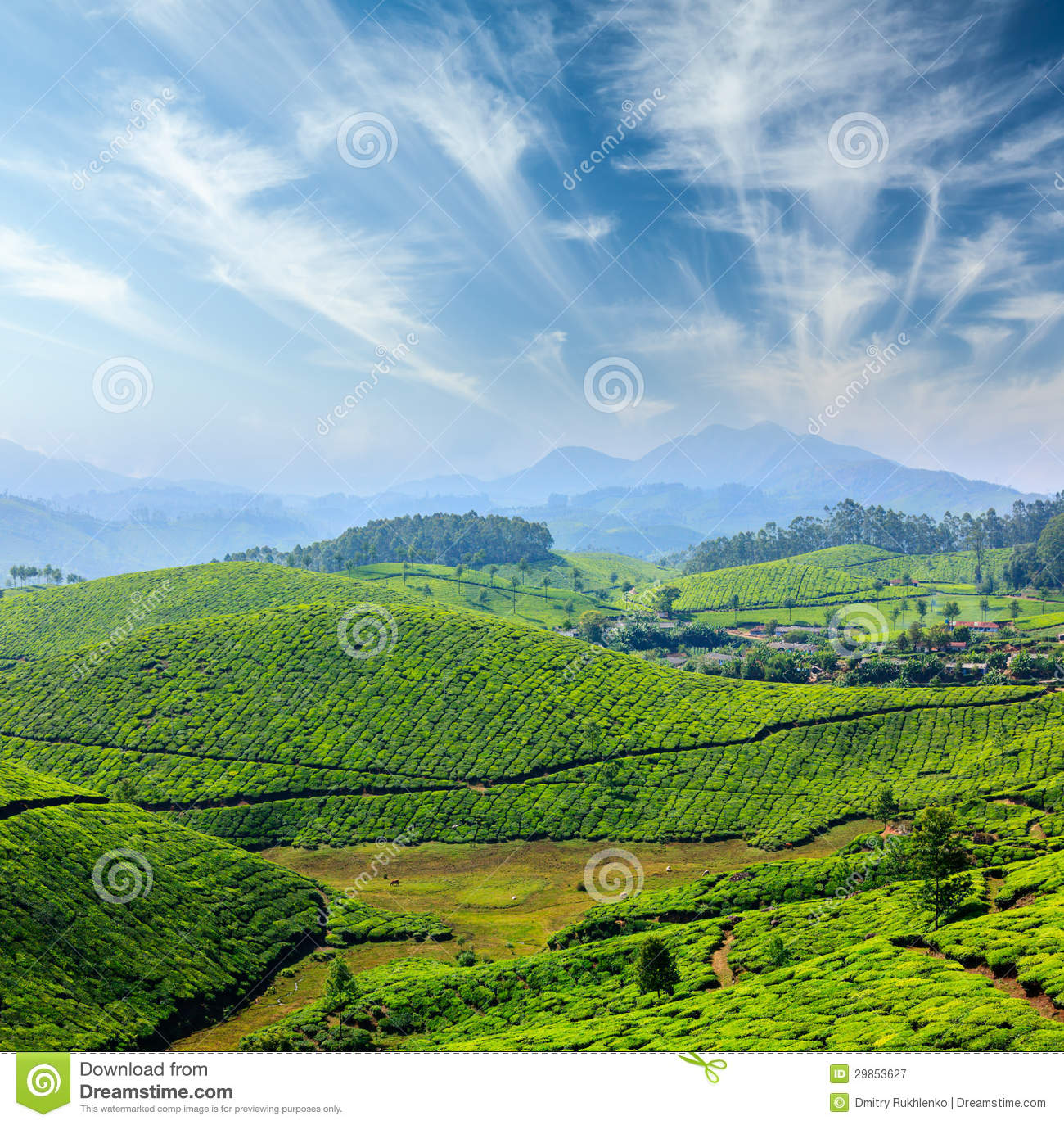 ... Kerala concept background - tea plantations. Munnar, Kerala, India