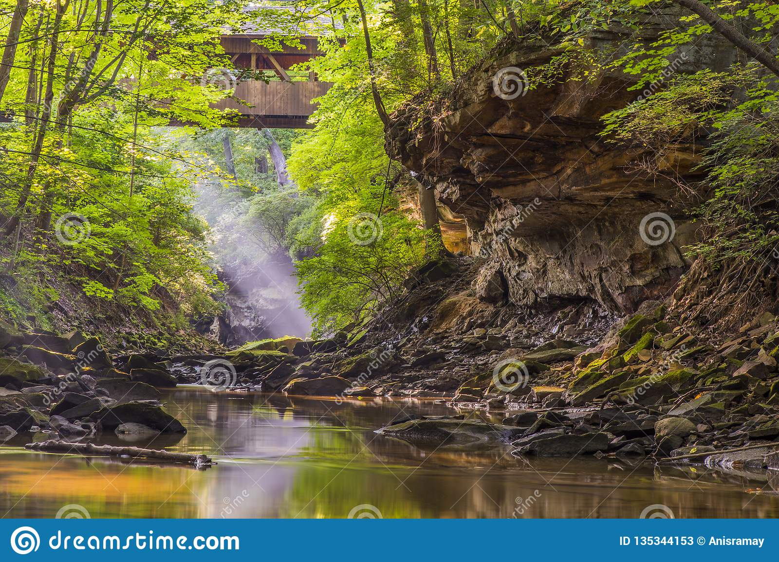Travel, north east ohio, USA, sun rays, wild, jungle, forest, bridge, canyon, george, nature at its best