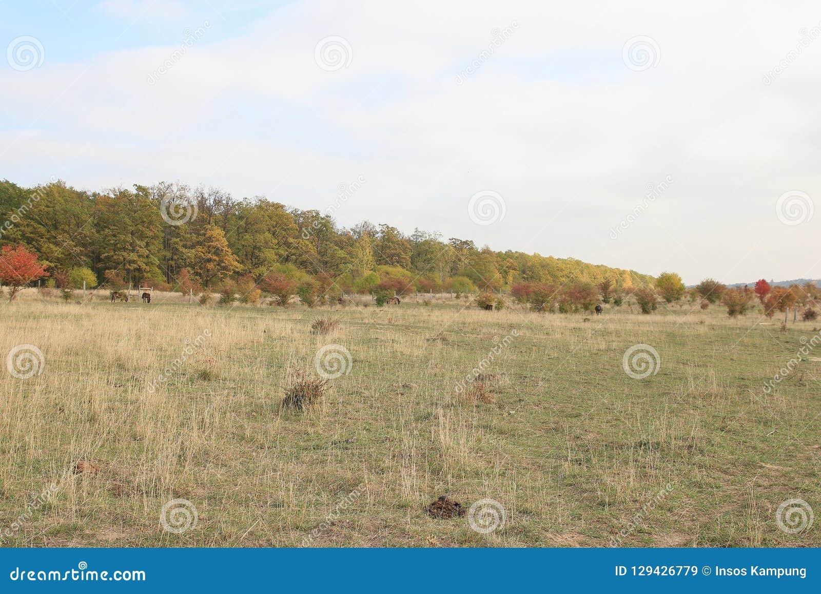 Traviny Nature Reserve, Czech Republic