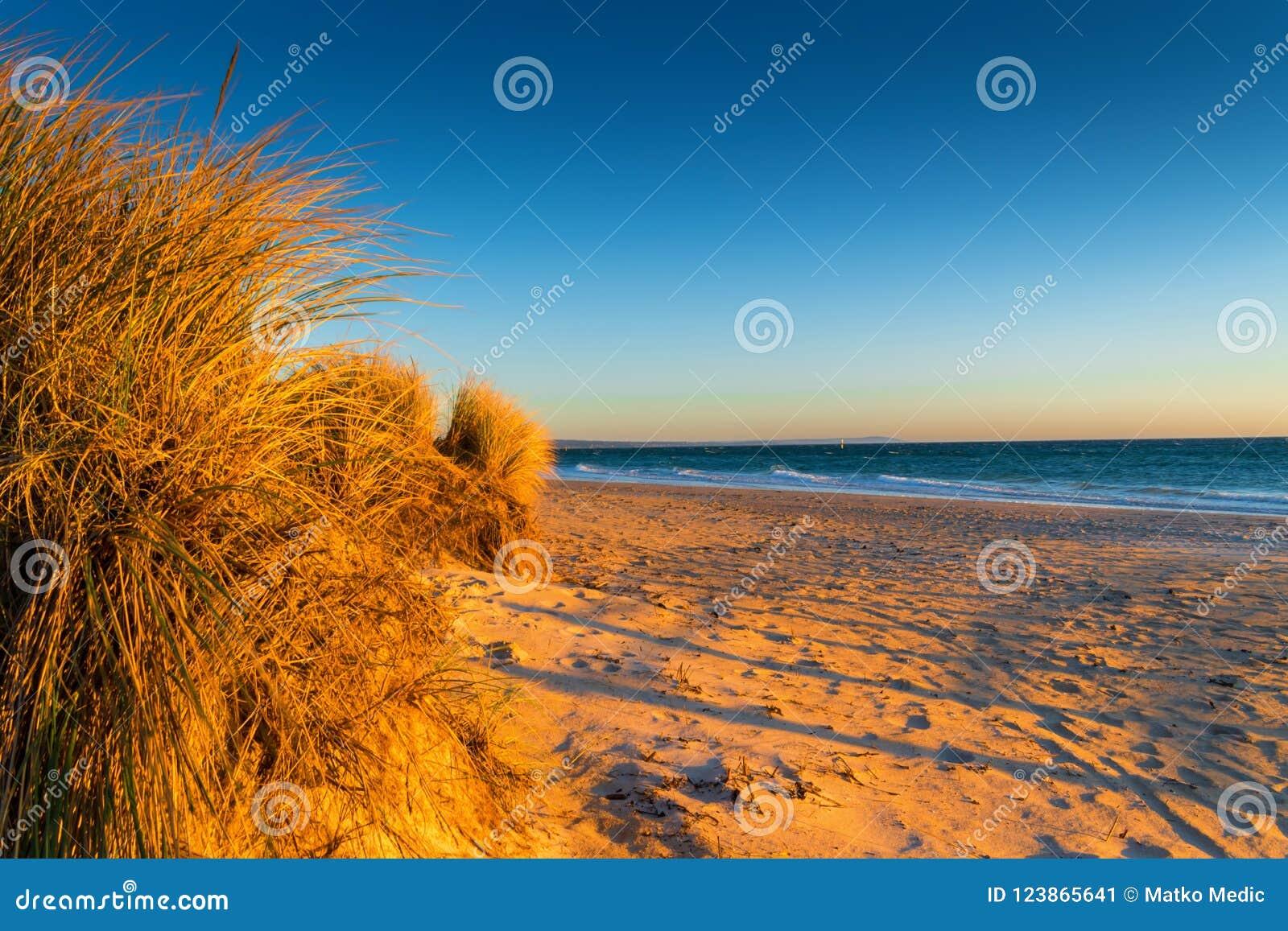 Trawa i plaża przy zmierzchem
