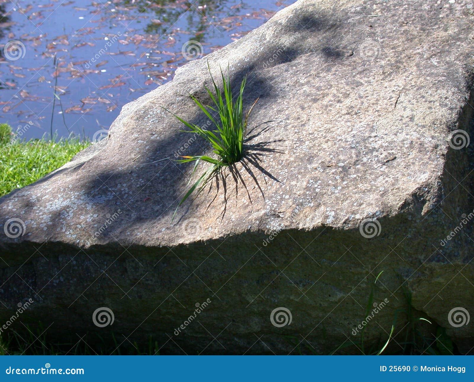 Trawa kamień