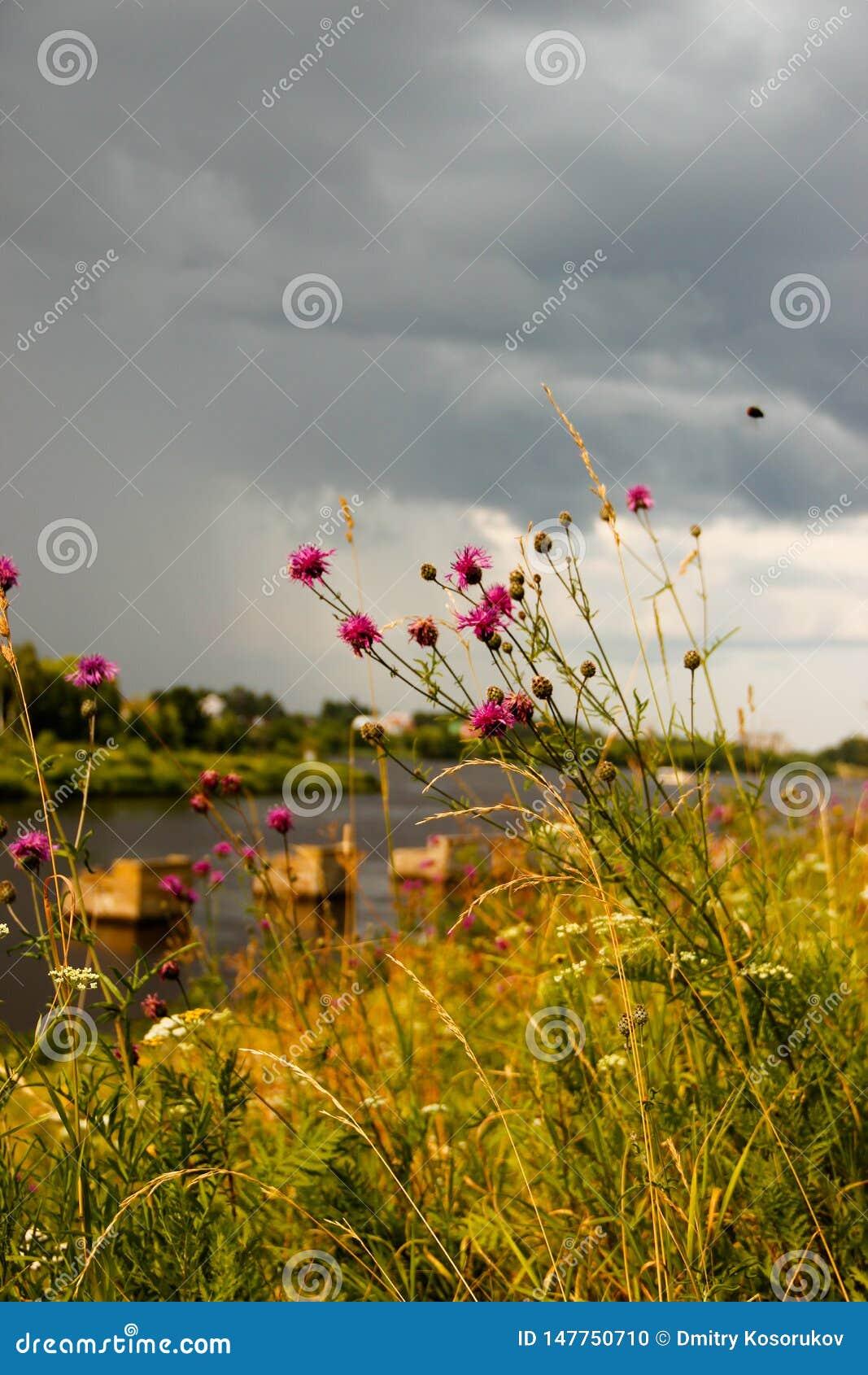Trawa rozgałęzia się na tle burzy chmura
