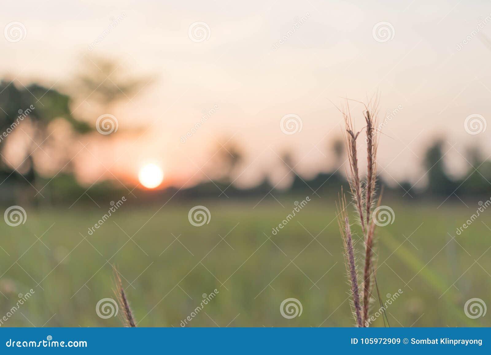 Trawa w polu dużego słońce w tle