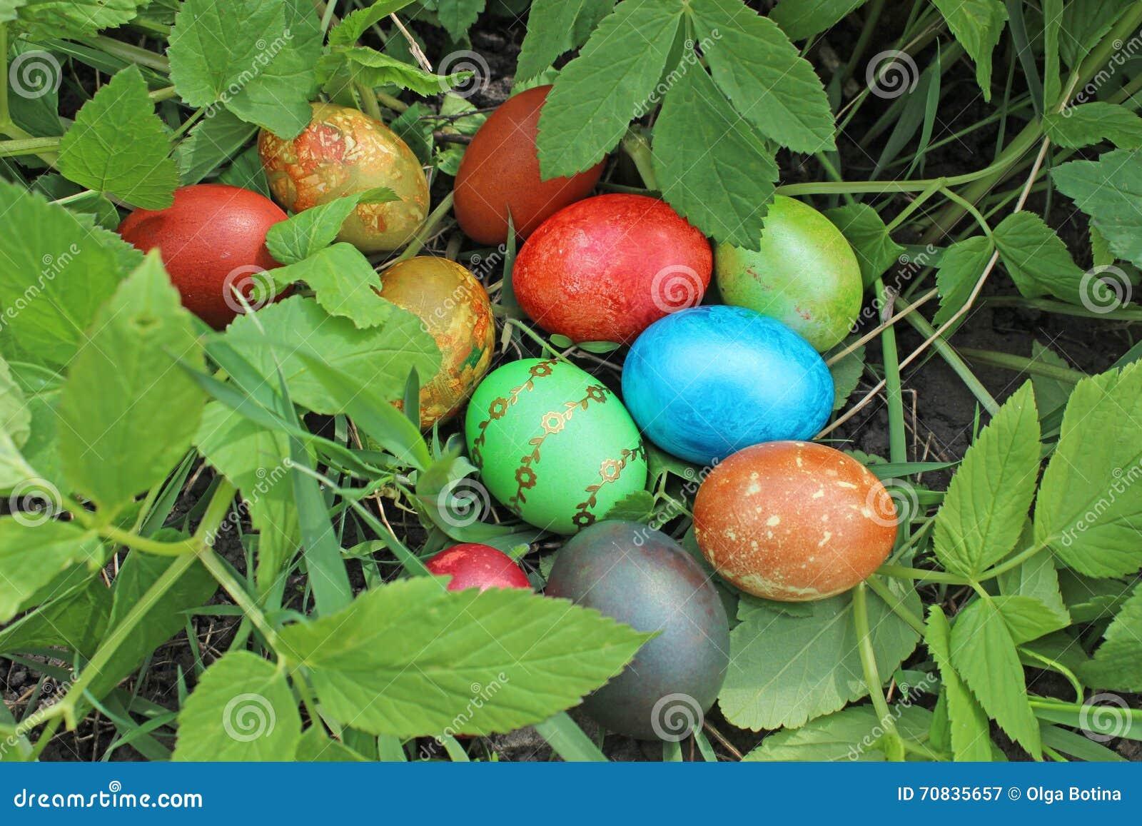 Trawa wielkanoc jaj