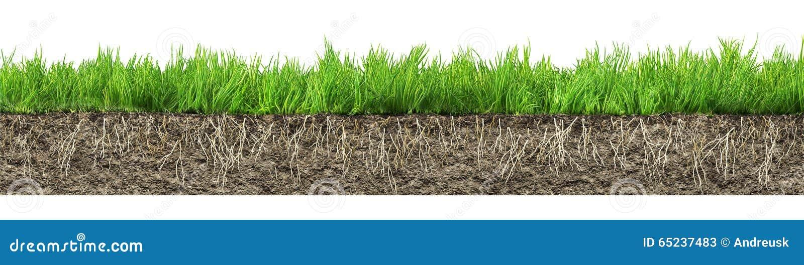 Trawa z korzeniami i ziemią