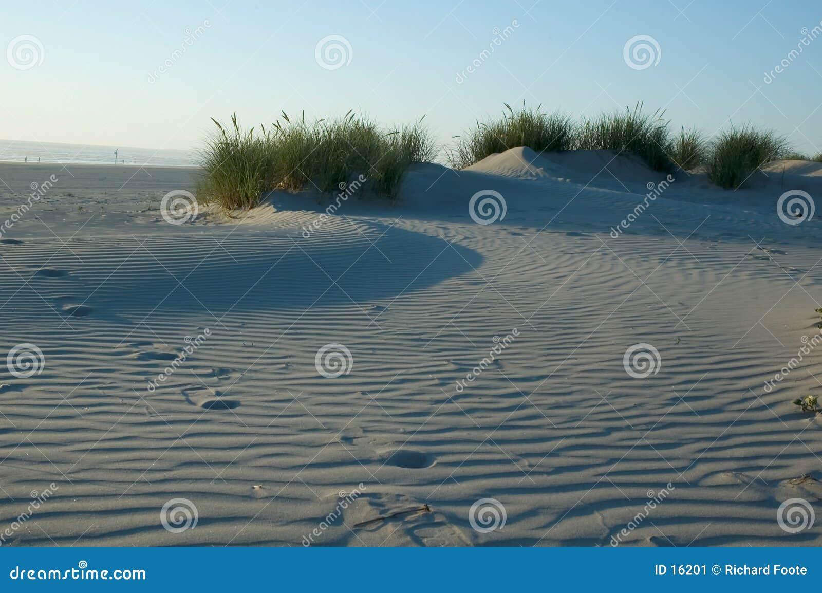 Trawiasty wydm piasku