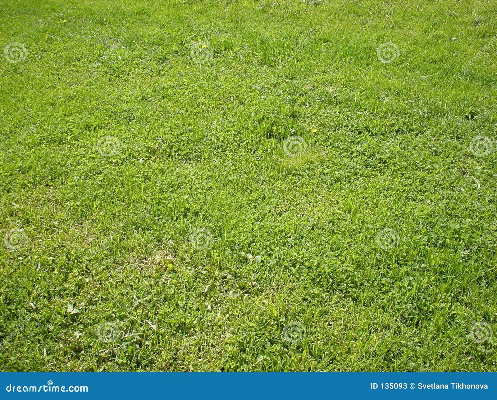 Trawy tła green