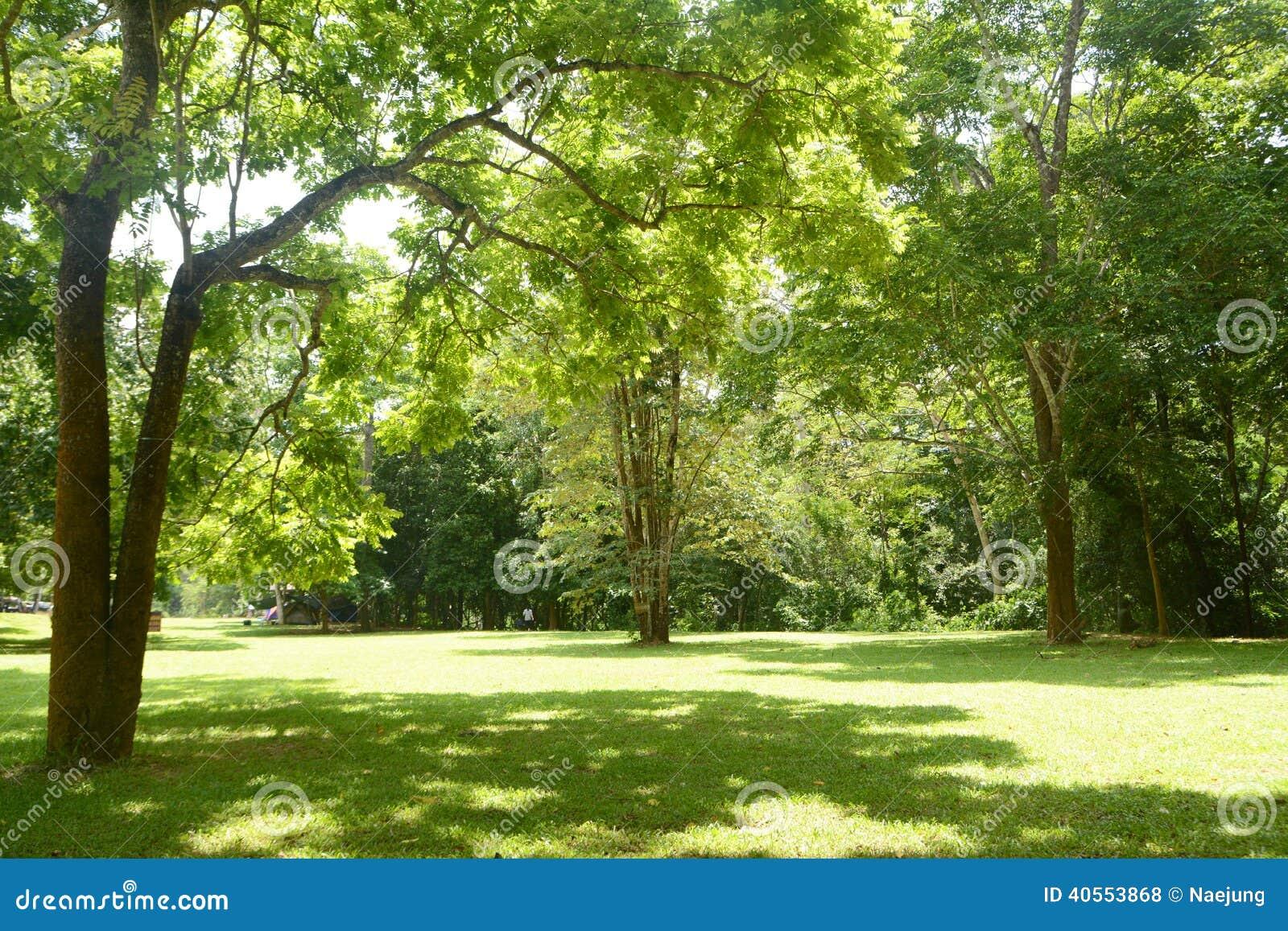 Trawy zieleni drzewo