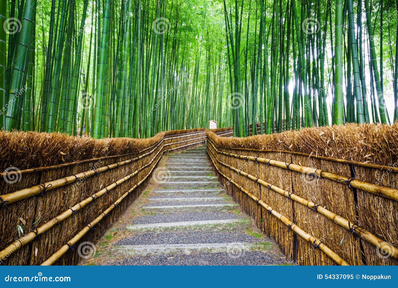 Trayectoria al bosque de bambú, Arashiyama, Kyoto, Japón