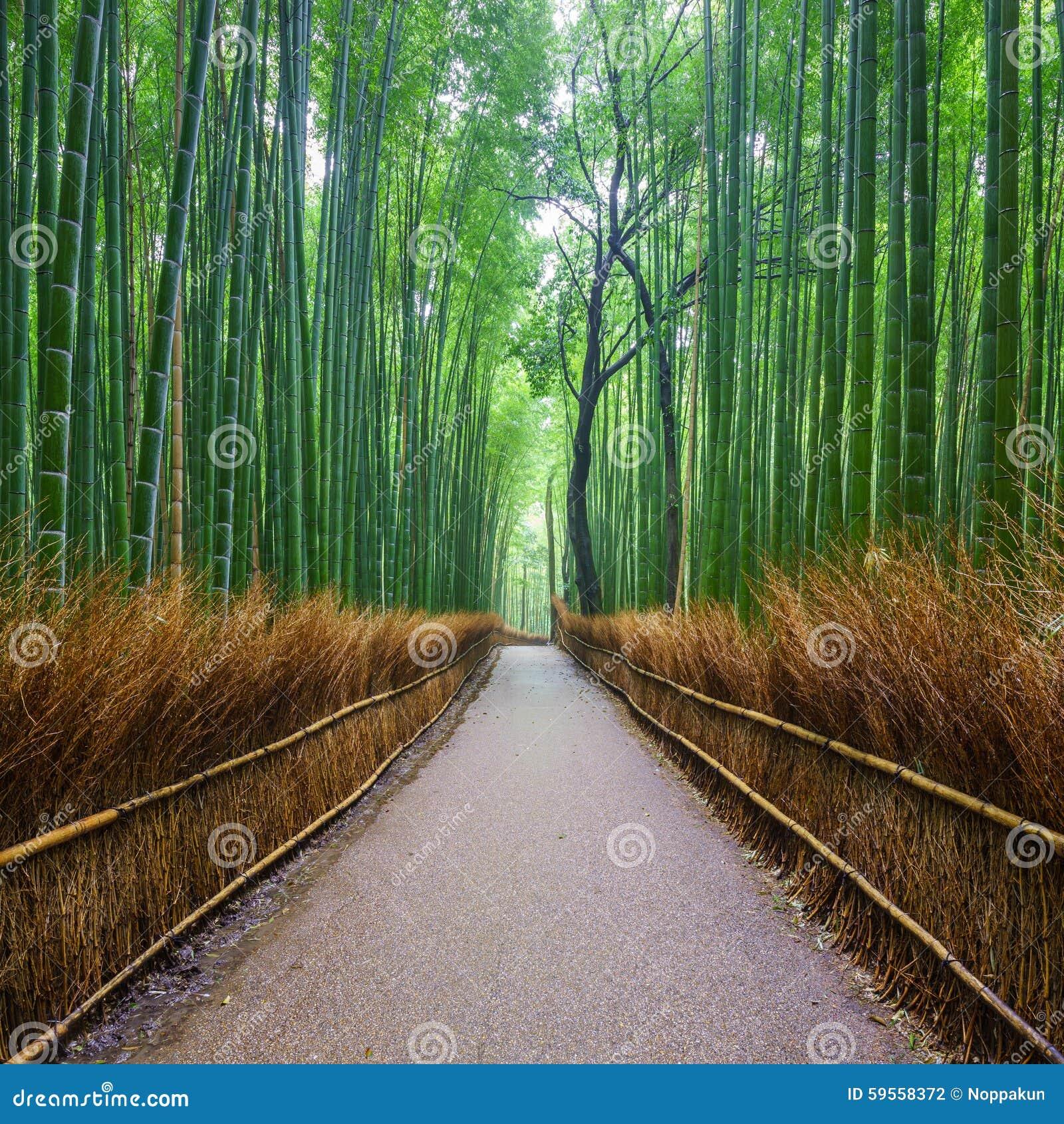 Trayectoria al bosque de bambú, Kyoto, Japón