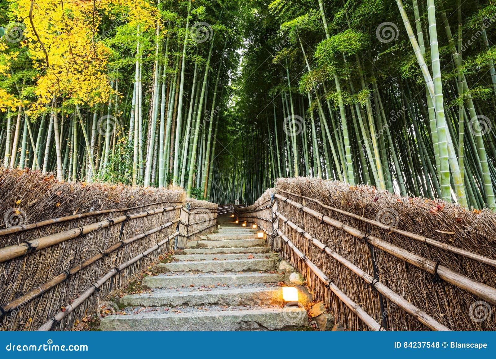 Trayectoria de bosque de bambú de Arashiyama, Kyoto