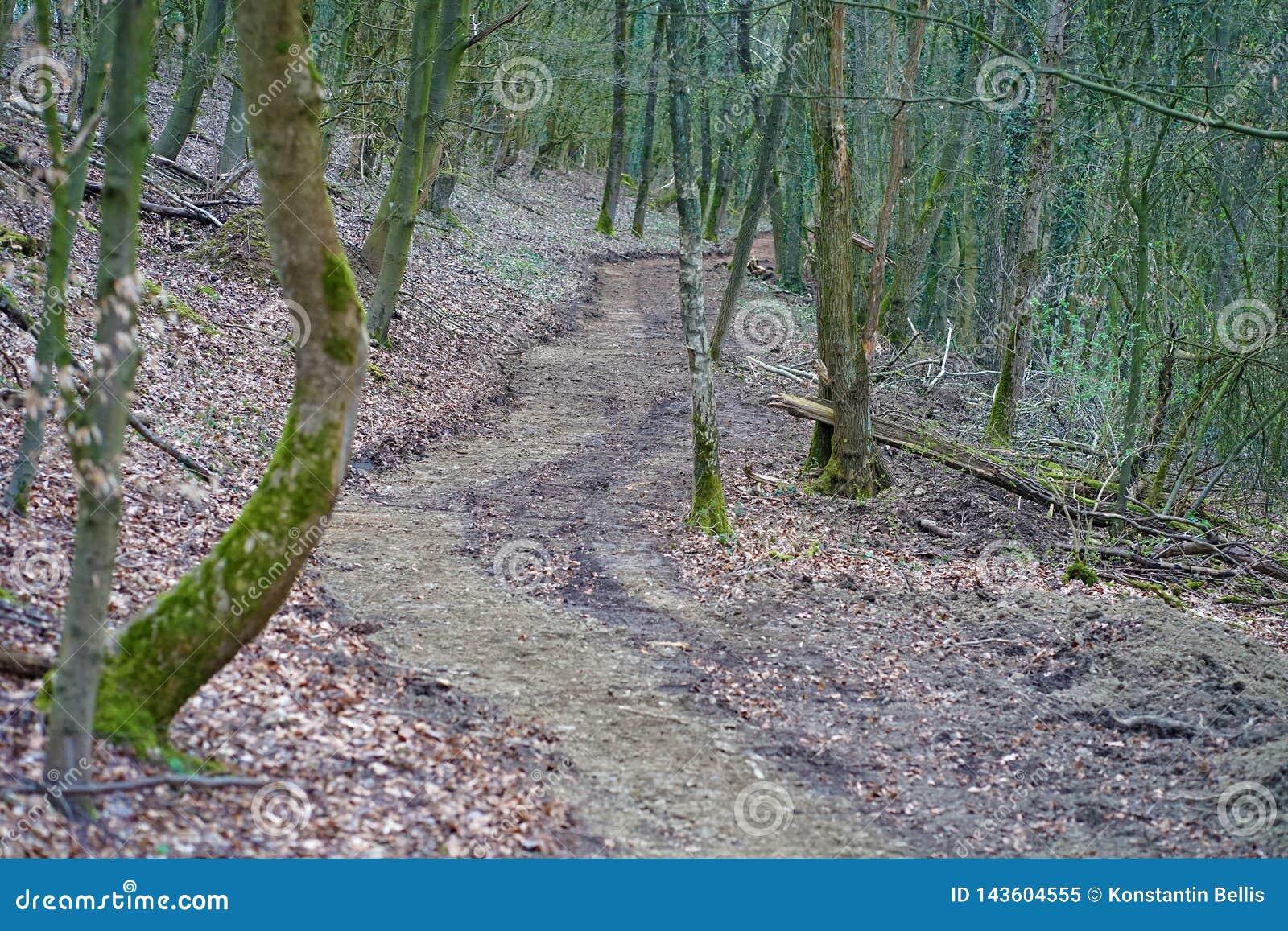 Trayectoria de bosque en Alemania