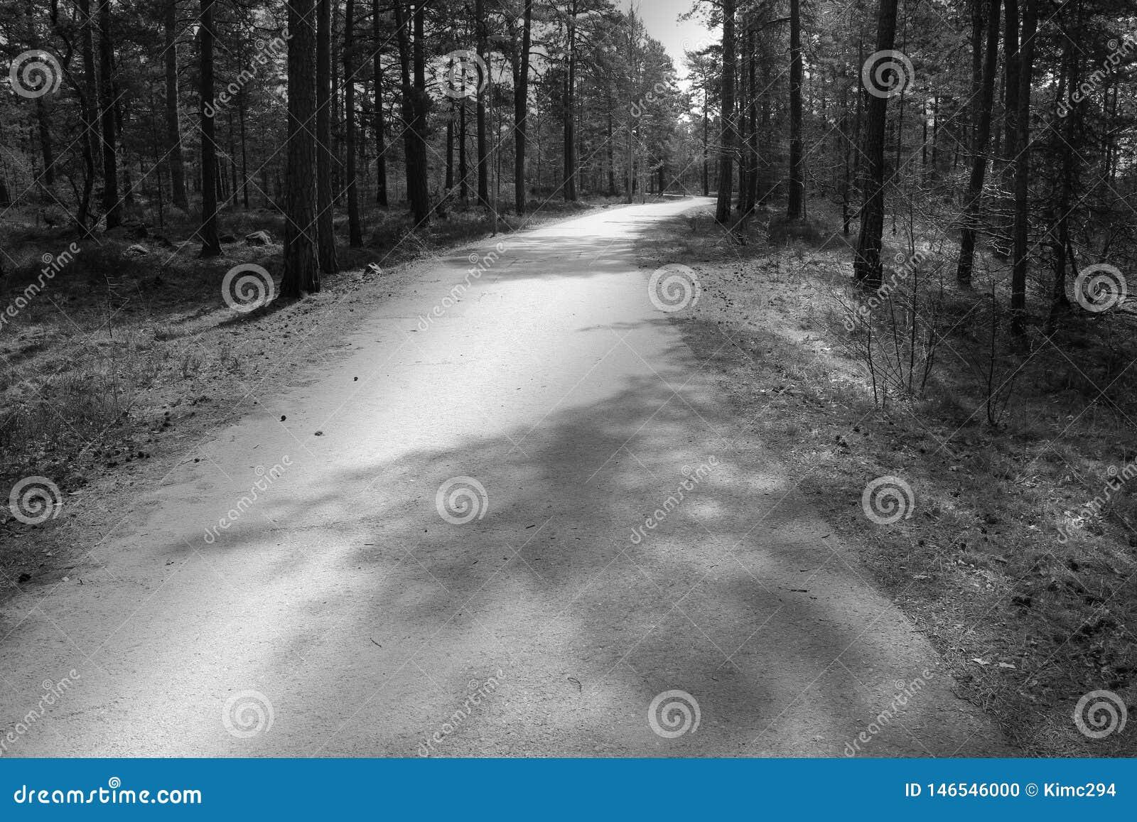Trayectoria de la bicicleta que lleva a través del bosque
