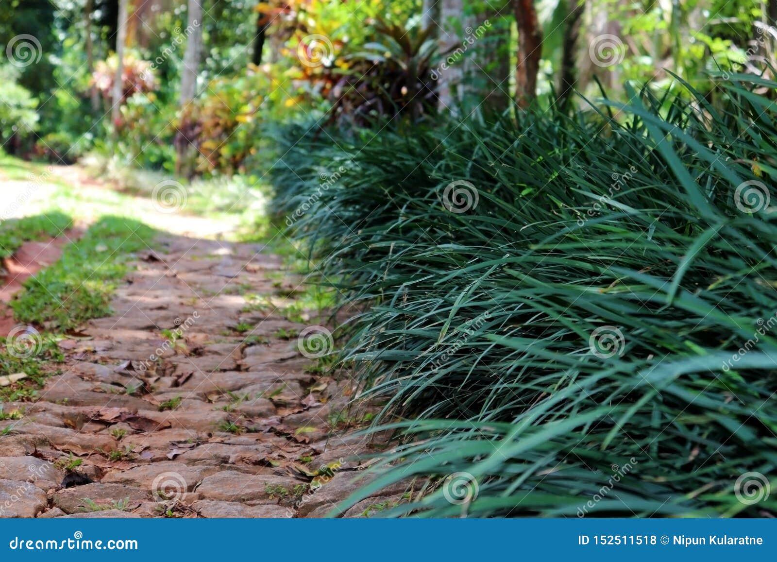 Trayectoria de piedra del paseo de un jardín con los arbustos