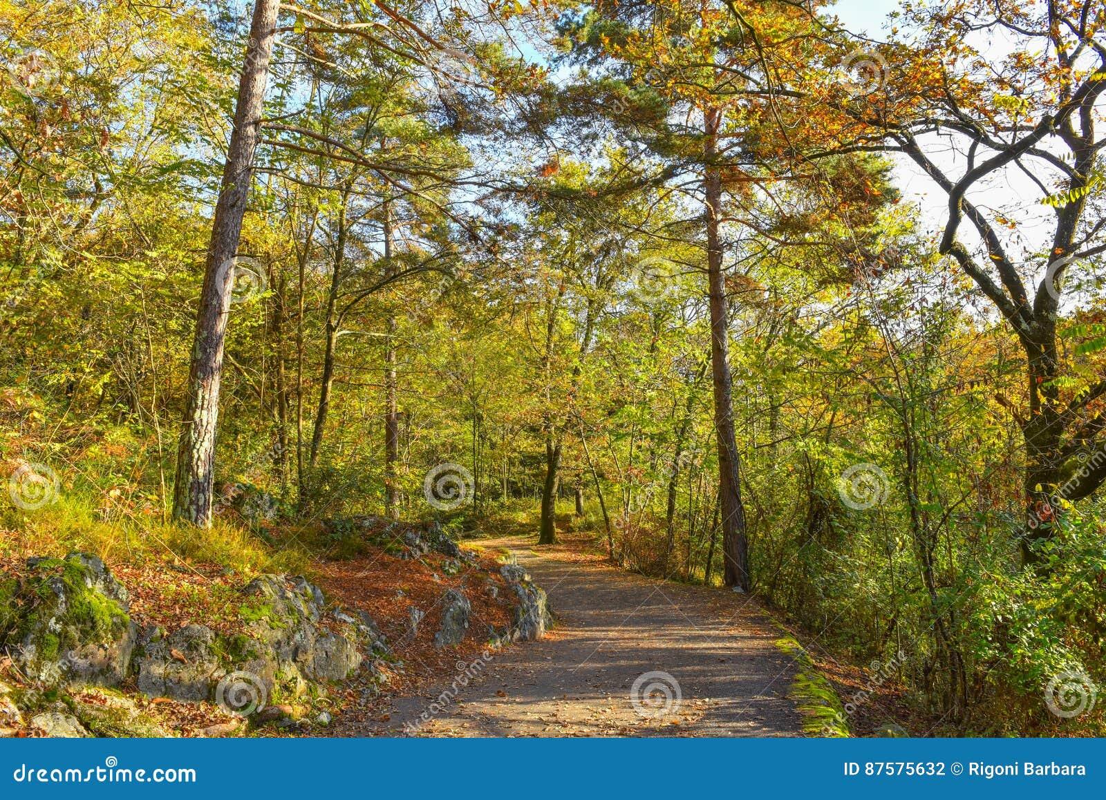 Trayectoria del otoño a través del bosque