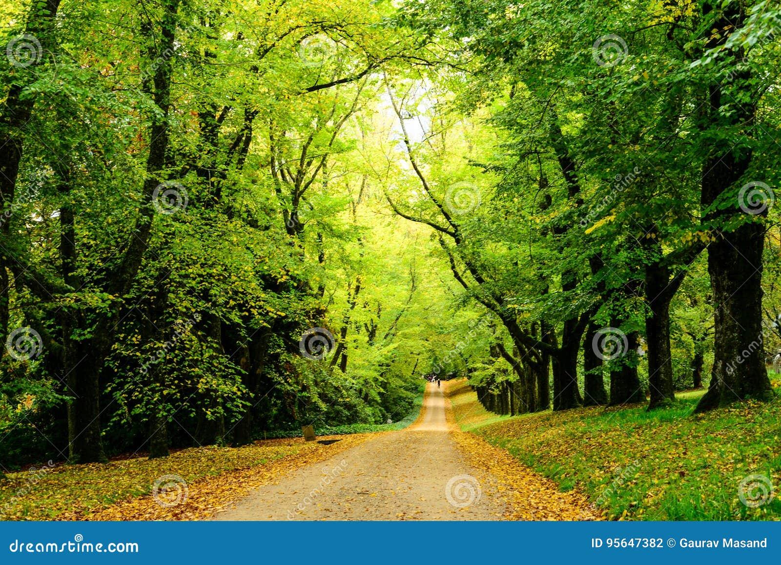 Trayectoria en el bosque