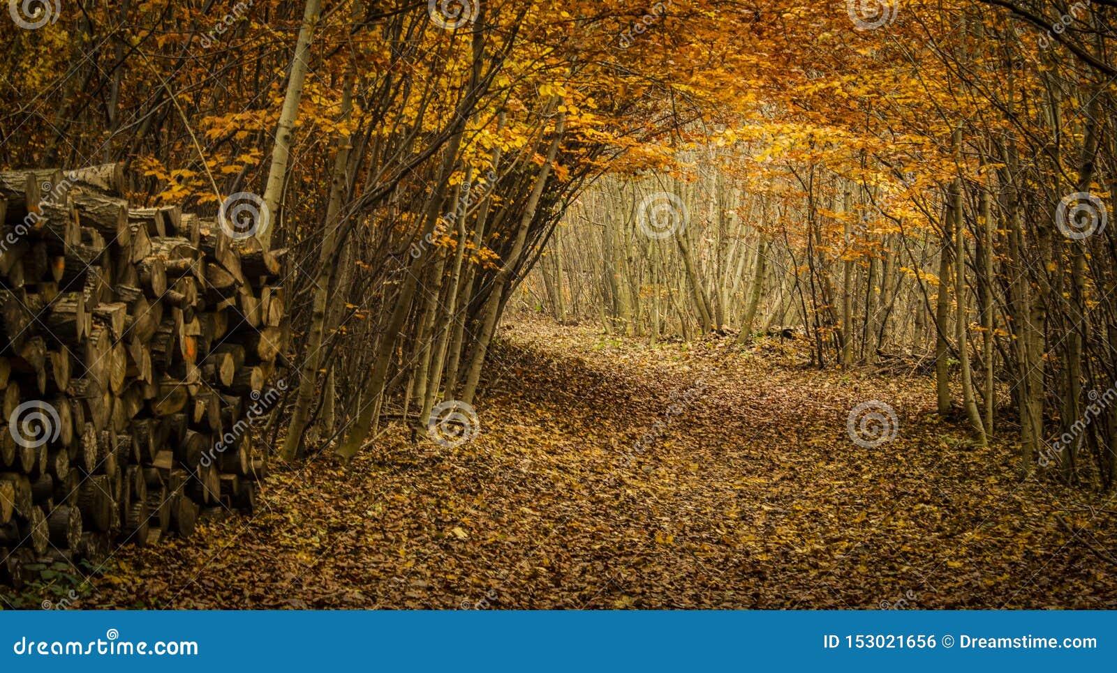 Trayectoria reservada en bosque colorido en octubre
