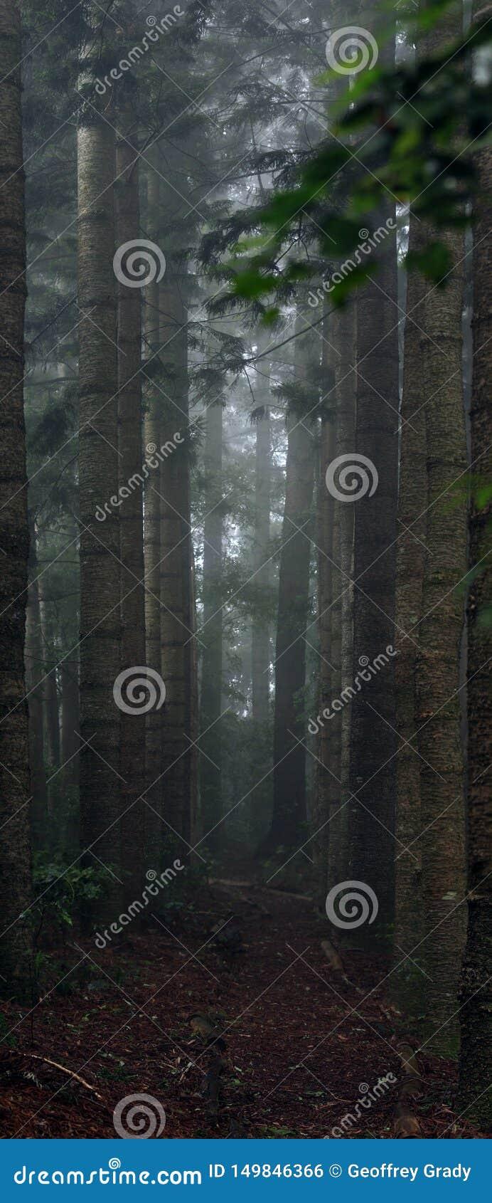 Trayectoria sola entre árboles altos