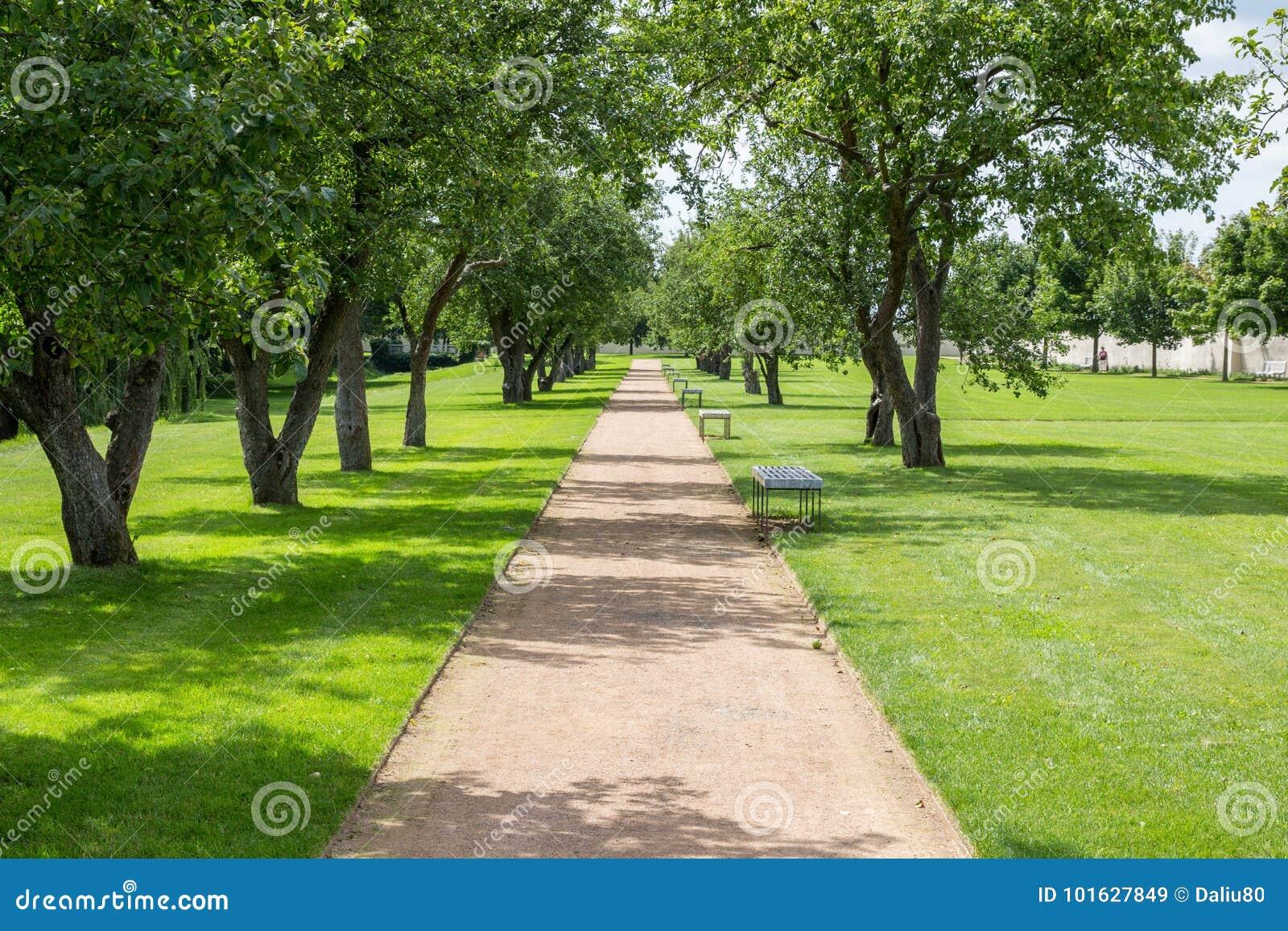 Trayectoria a través del parque en verano