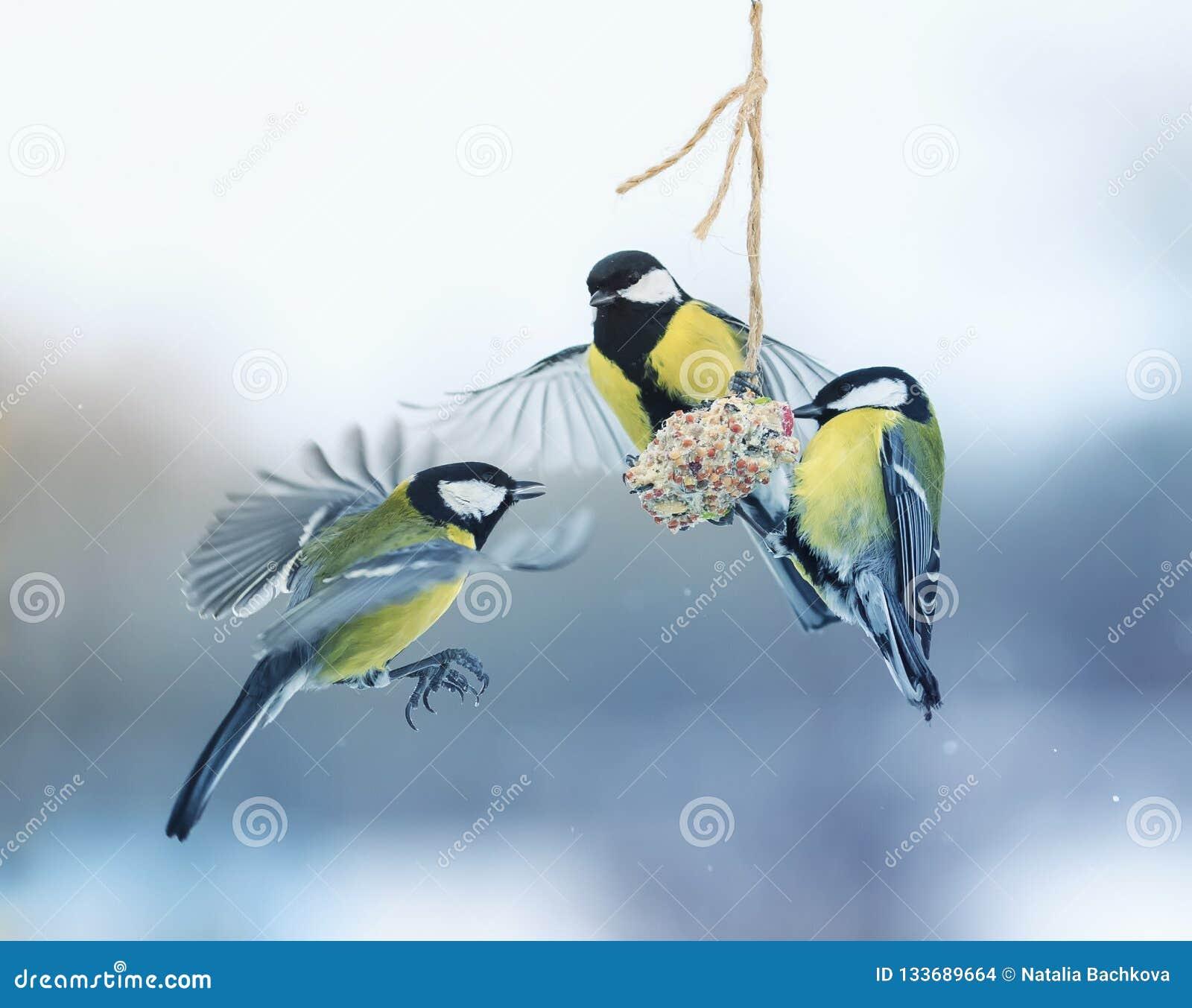 Tre bei piccoli capezzoli affamati dell uccello hanno volato su una mangiatoia d attaccatura