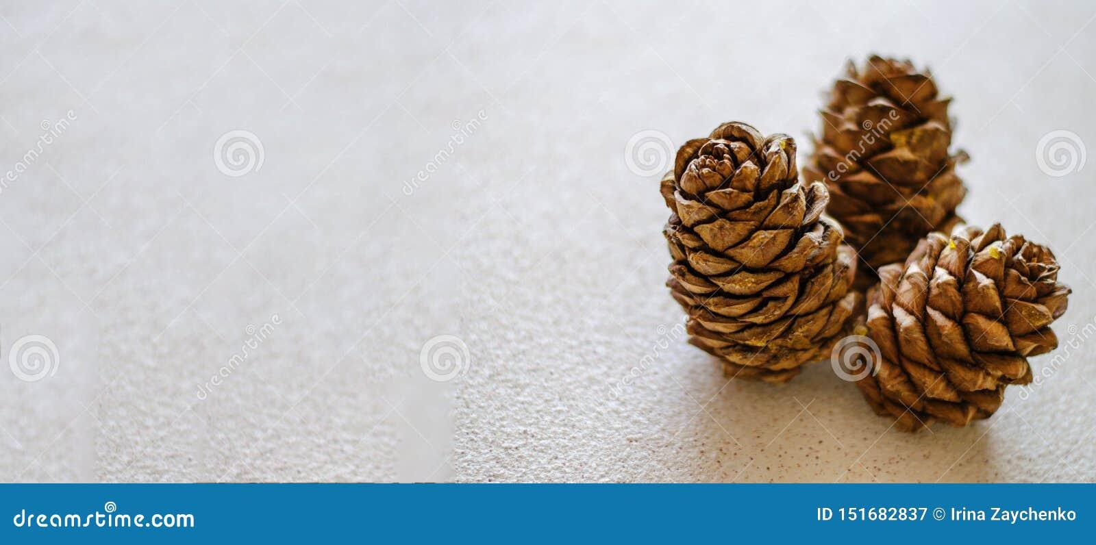 Tre coni del cedro vicino su su un fondo bianco