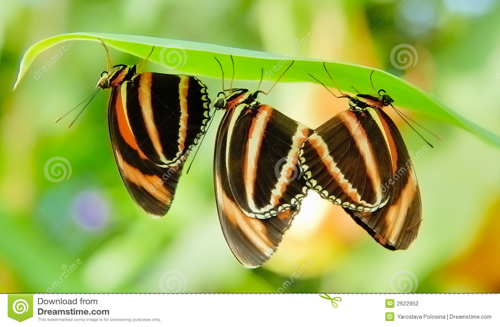 Tre farfalle
