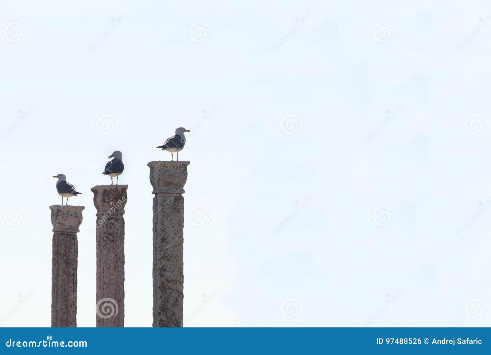 Tre gabbiani su tre colonne contro fondo pulito,