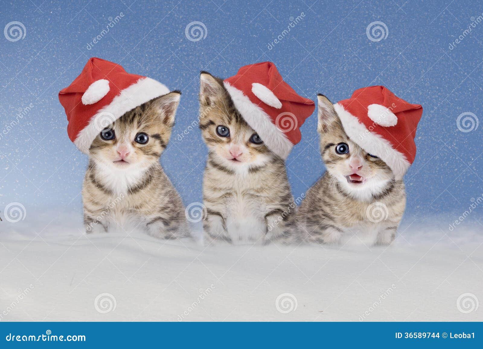 tre gattini con i cappelli di natale che si siedono nella