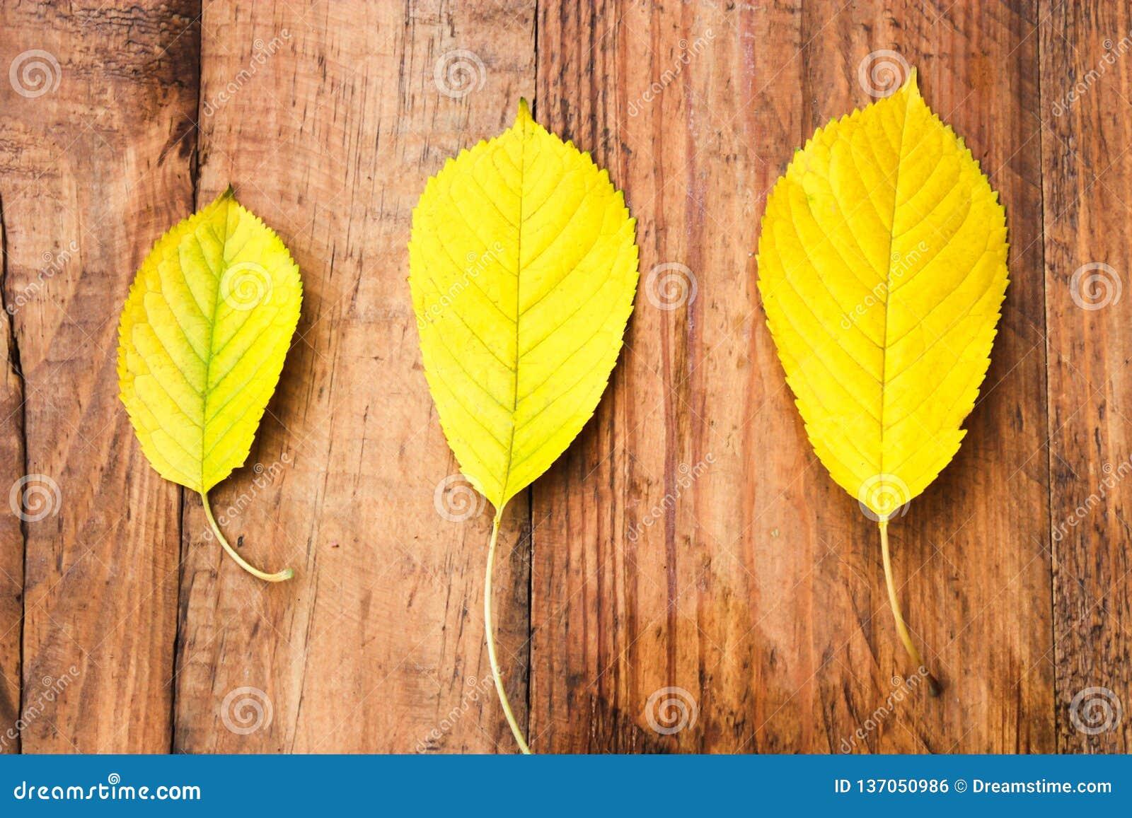 Tre gula höstsidor på träbakgrund