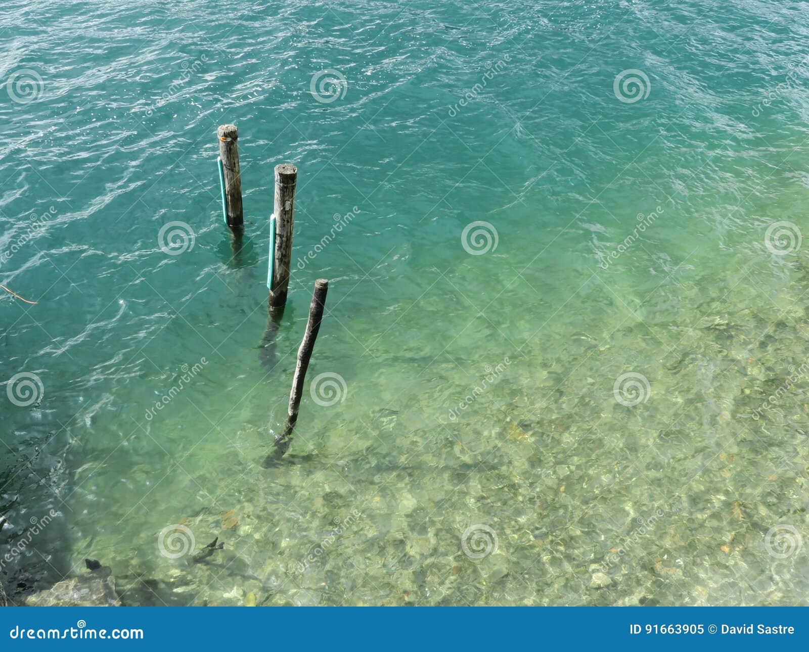 Tre i vatten
