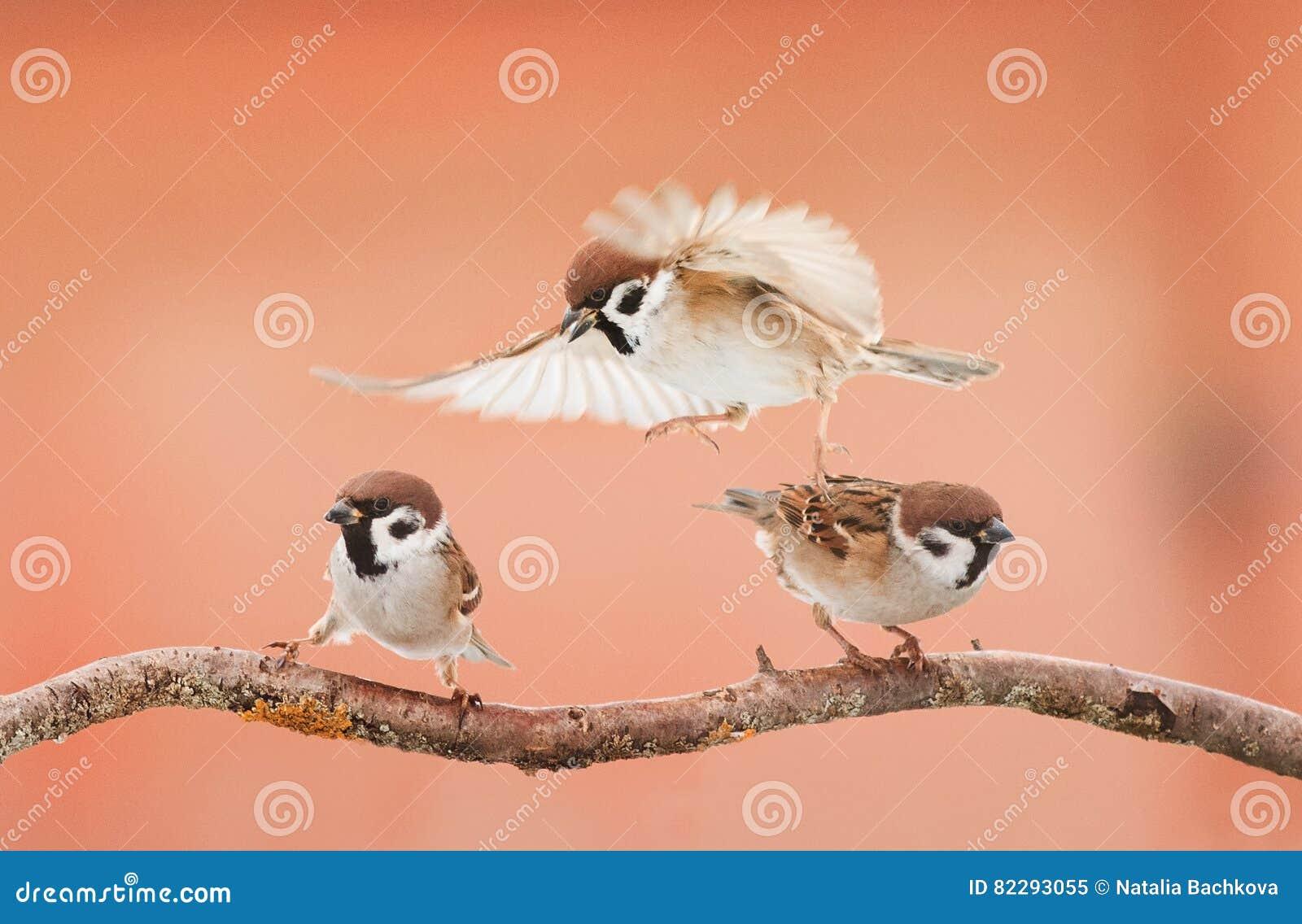 Tre ilskna fåglar som argumenterar på en filial i solig dag